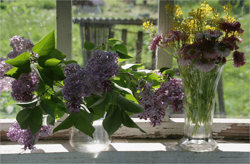 "photo ""The summer window"" tags: still life,"