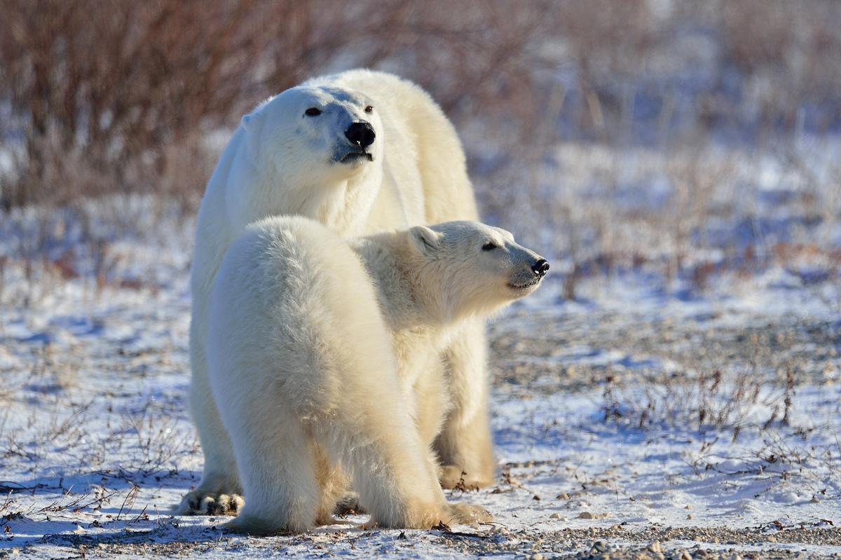 """фото """"С мамой не страшно"""" метки: природа,"""