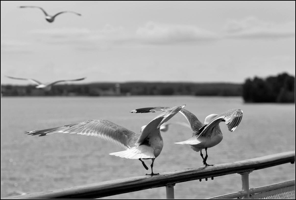 """фото """"АССА)))"""" метки: природа, путешествия,"""