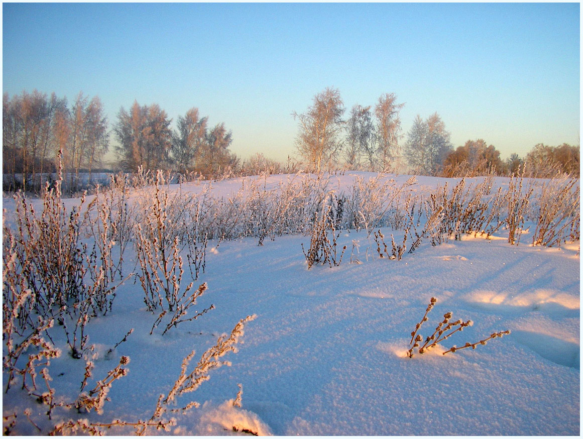 "photo ""***"" tags: landscape, field, forest, winter"