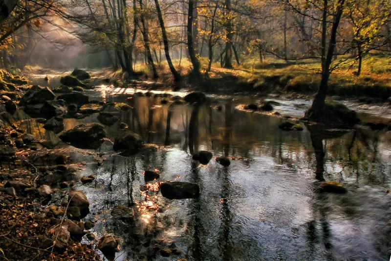 """фото """"Magical Forest 2"""" метки: пейзаж,"""