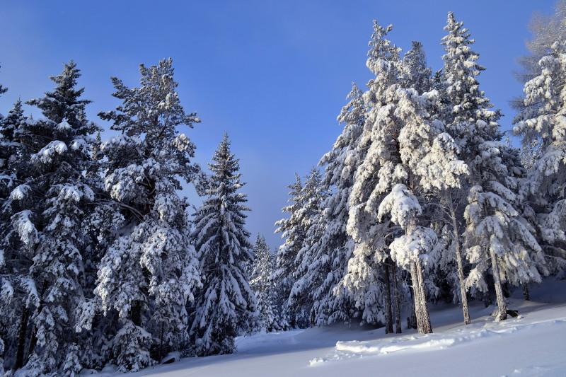 """фото """"Зимняя."""" метки: пейзаж, природа, зима, пейзаж."""
