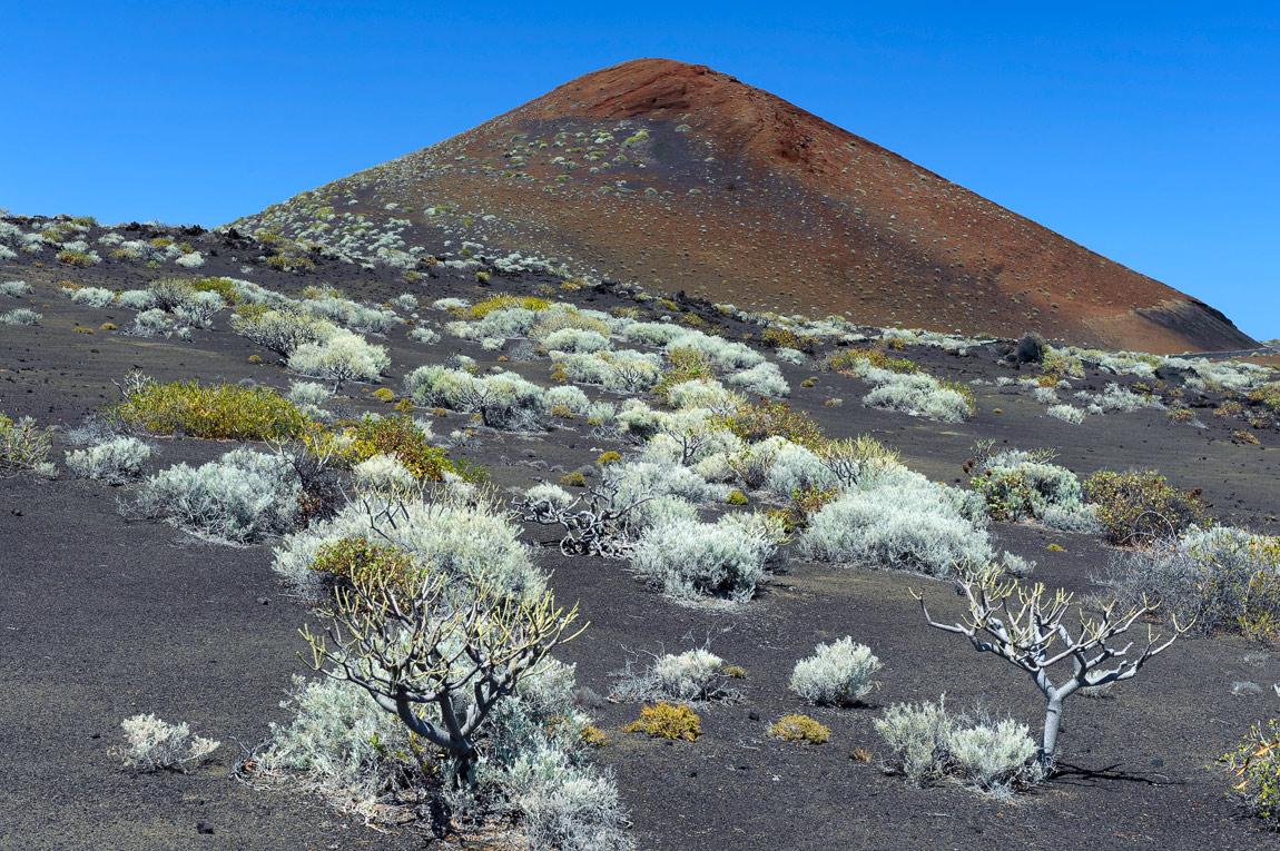 "фото ""Просто Марс"" метки: пейзаж, путешествия, природа, Европа, Испания, Канарские острова, Эль Йерро, земля, растение, флора"