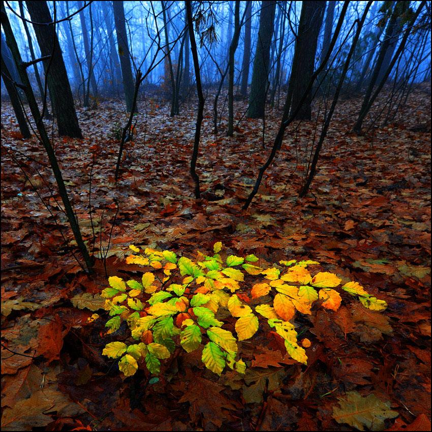 """photo """"Autumncolours"""" tags: landscape,"""