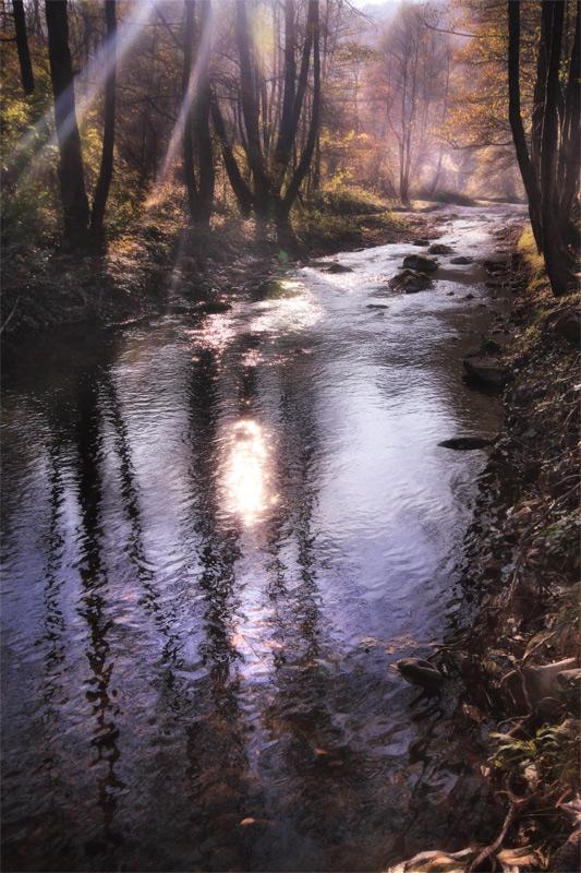 """фото """"Magical Forest"""" метки: пейзаж, вода, лес"""