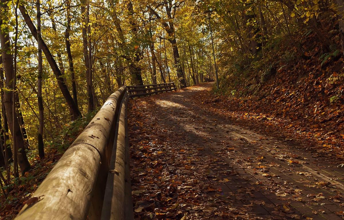 """фото """"Осень..."""" метки: пейзаж, осень"""