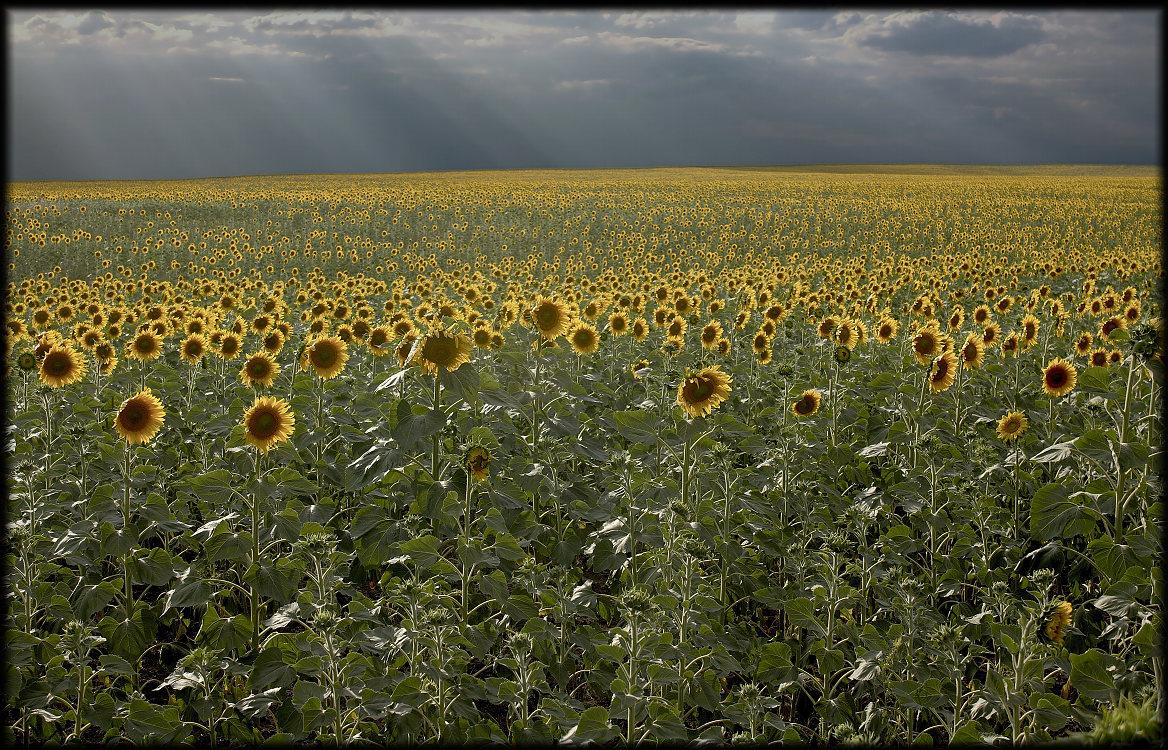"фото ""Песня осеннему солнцу."" метки: пейзаж, луг, облака, осень"