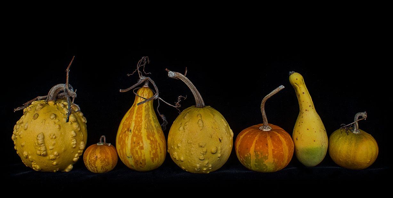 "photo ""Pumpkin assortment"" tags: still life, много тыквочек"