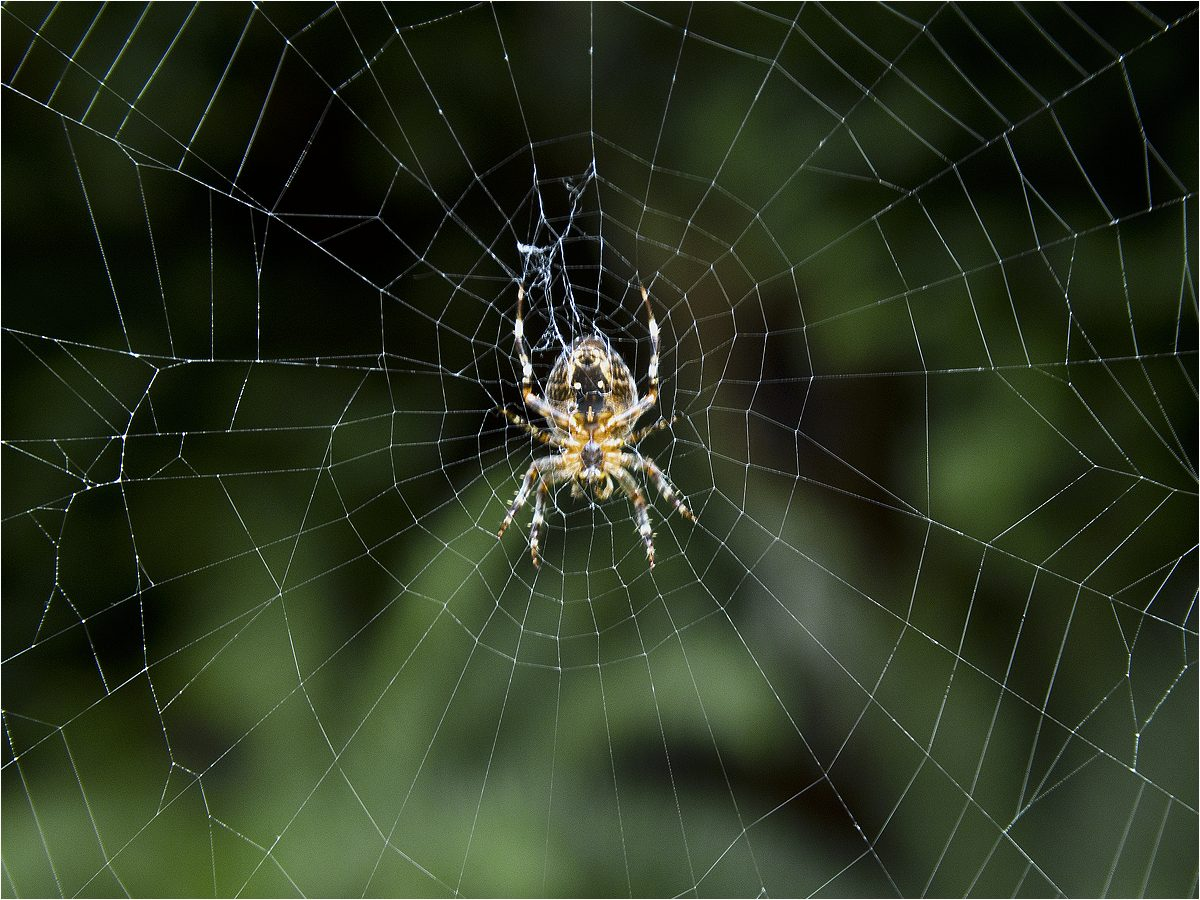 "photo ""Iinside out"" tags: macro and close-up, inside out, spider, spider, изнанка"