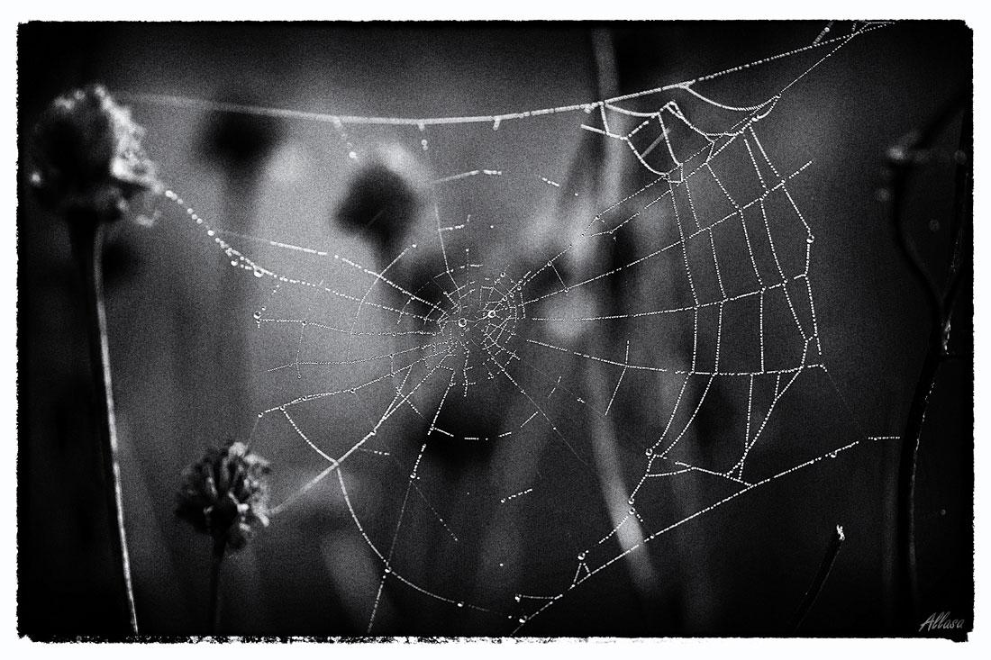 """фото """"Стильный черно-белый кошмар паучьего мира, который не стоит смотреть в одиночестве на сон грядущий."""" метки: черно-белые, юмор, digital art,"""