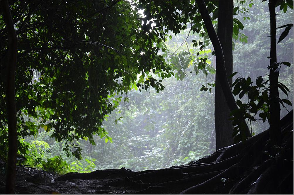 """фото """"Тропический дождь"""" метки: пейзаж, путешествия, лес"""