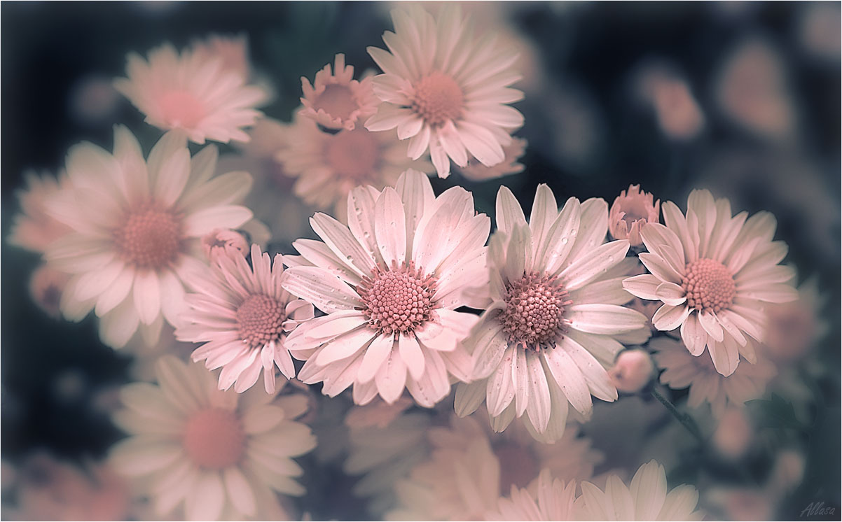 """фото """"Сон в розовых тонах...."""" метки: природа,"""