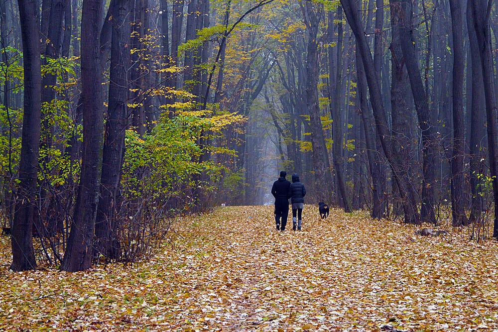 """фото """"The walk"""" метки: пейзаж, природа, fall, romania, дорога, лес, осень"""