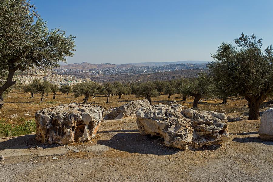 "фото ""Оливковая роща"" метки: пейзаж, путешествия, Иерусалим, Израиль, оливковая роща, сентябрь"