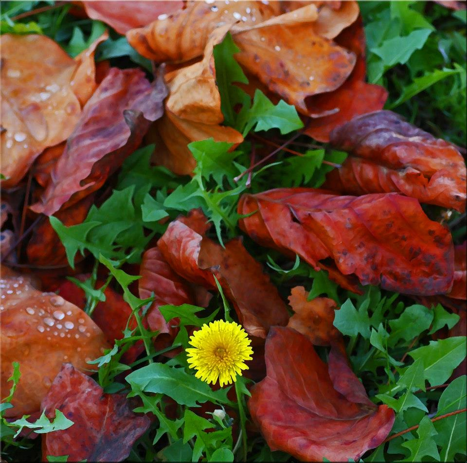 "photo ""Fallen Leaves And Dandelion"" tags: nature,"