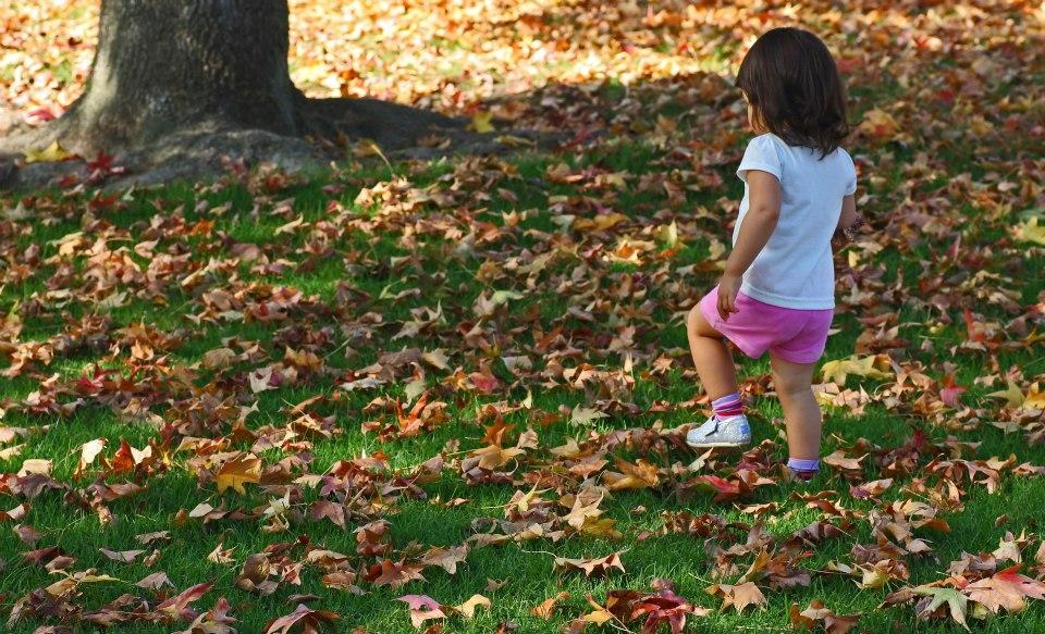 "фото ""Walk In The Leaves"" метки: пейзаж, природа, стрит-фото,"