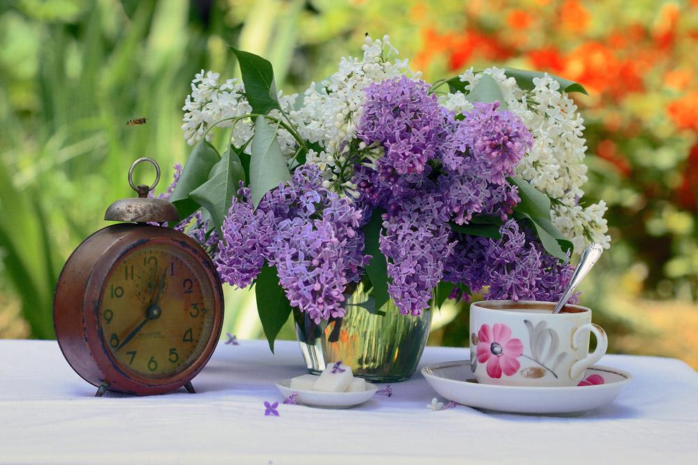 """фото """"весенний натюрморт"""" метки: натюрморт, природа, разное, весна, серень, чаепитие"""