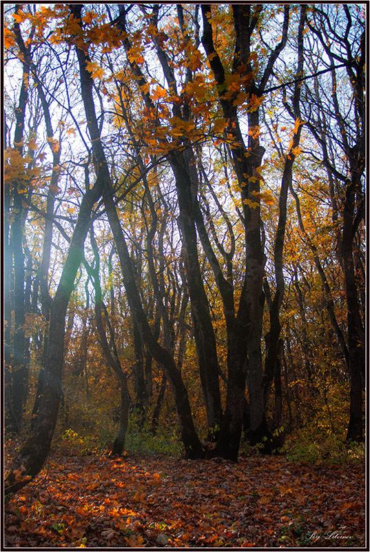 """фото """"***"""" метки: пейзаж, лес, осень"""