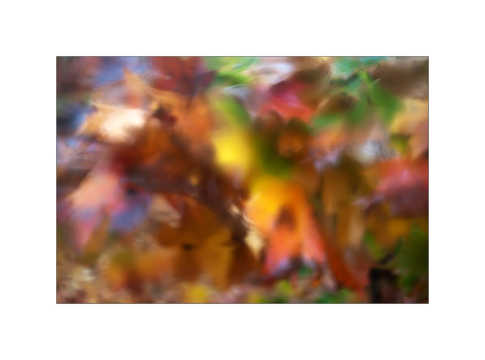 "фото ""ОА-2"" метки: природа, осень, оченькрасиво, почтиШедевр"