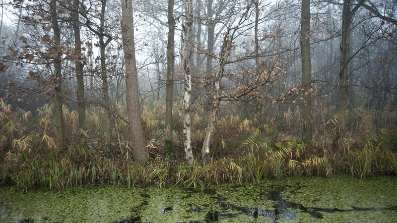 "фото ""#6549 Swamp"" метки: пейзаж, природа, forrest, green, Европа, вода, дерево"