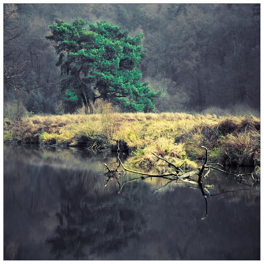 "фото ""***"" метки: пейзаж, природа, натюрморт,"