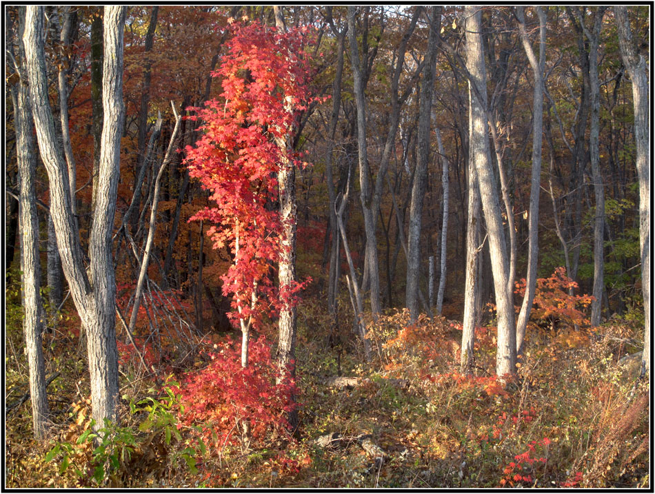 "фото ""Щеголь"" метки: , краски., лес, осень"