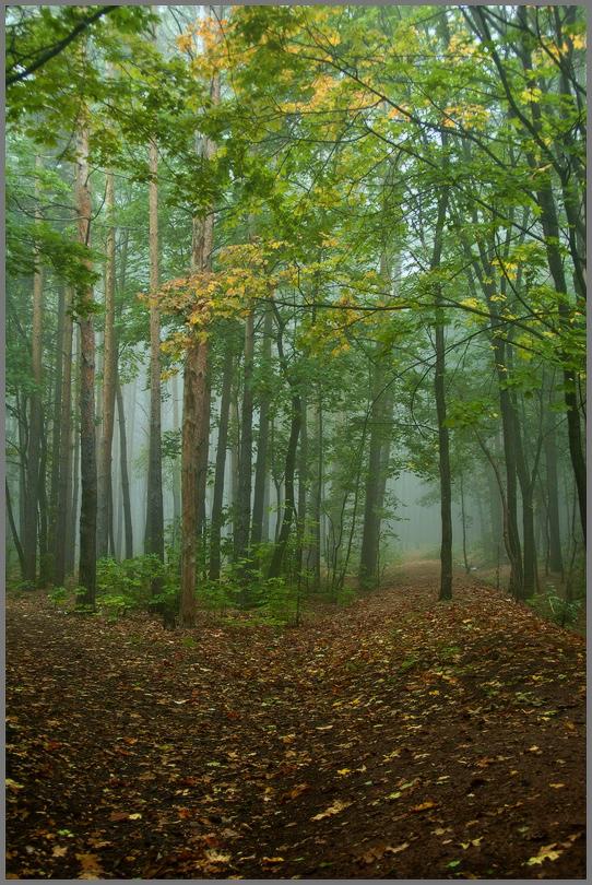 """фото """"Утро в лесу..."""" метки: пейзаж,"""