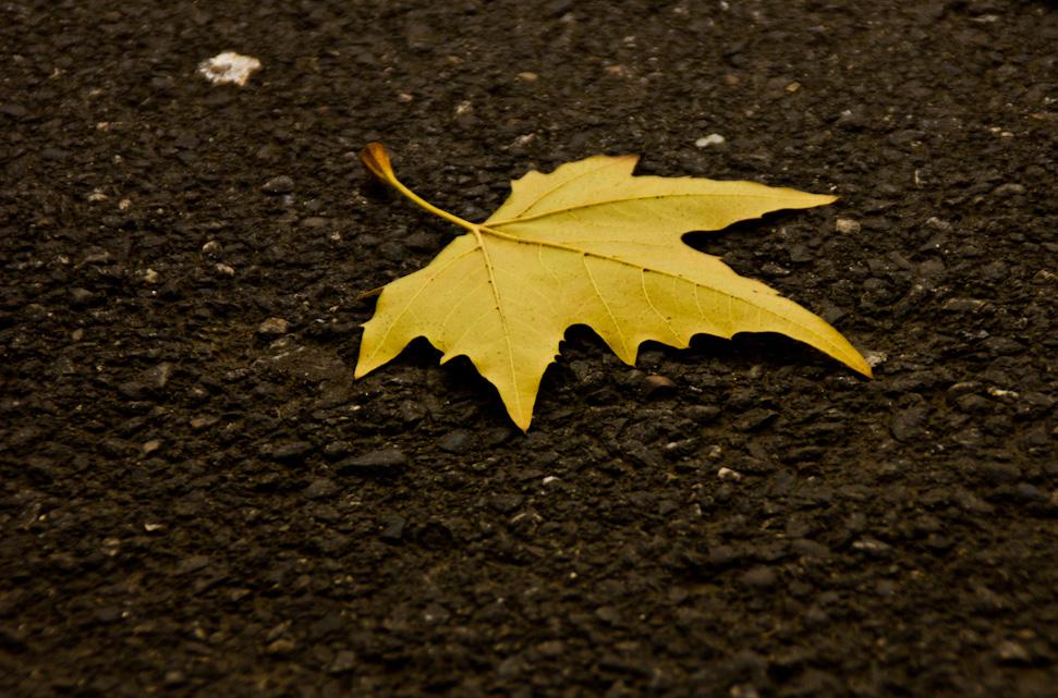 "фото ""Осень..."" метки: природа,"