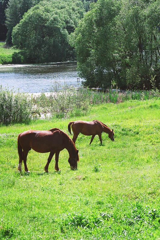"""фото """"Лето"""" метки: пейзаж, вода, домашние животные, лето"""