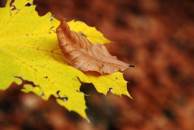 """фото """"foliage"""" метки: макро и крупный план,"""