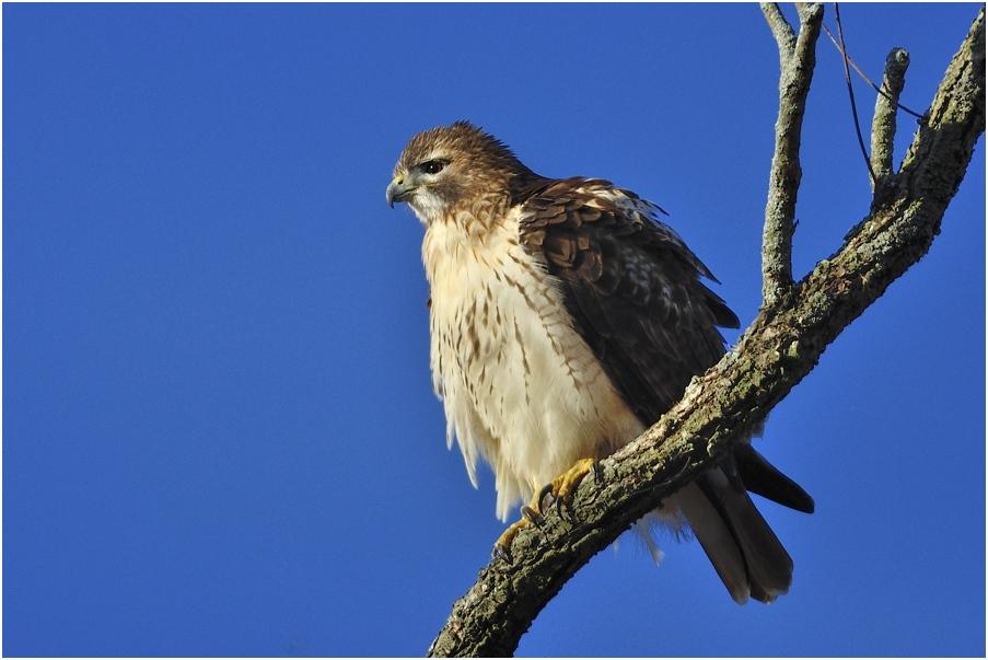 """фото """"Печально я гляжу на наше поколенье!"""" метки: природа, птица"""
