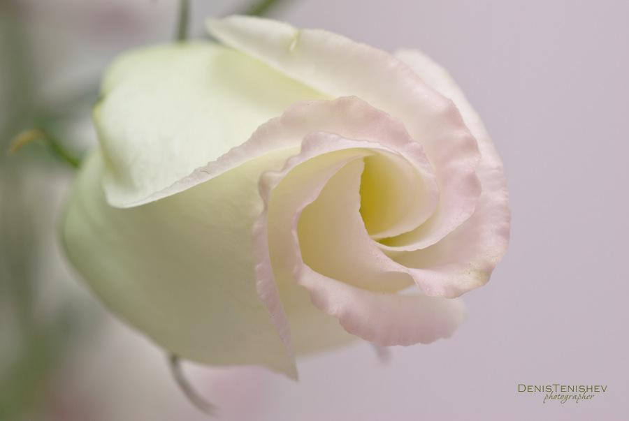 """фото """"Floral tenderness"""" метки: макро и крупный план,"""
