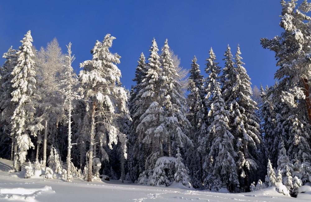 """фото """"Зимняя сказка."""" метки: пейзаж, зима.природа., пейзаж."""