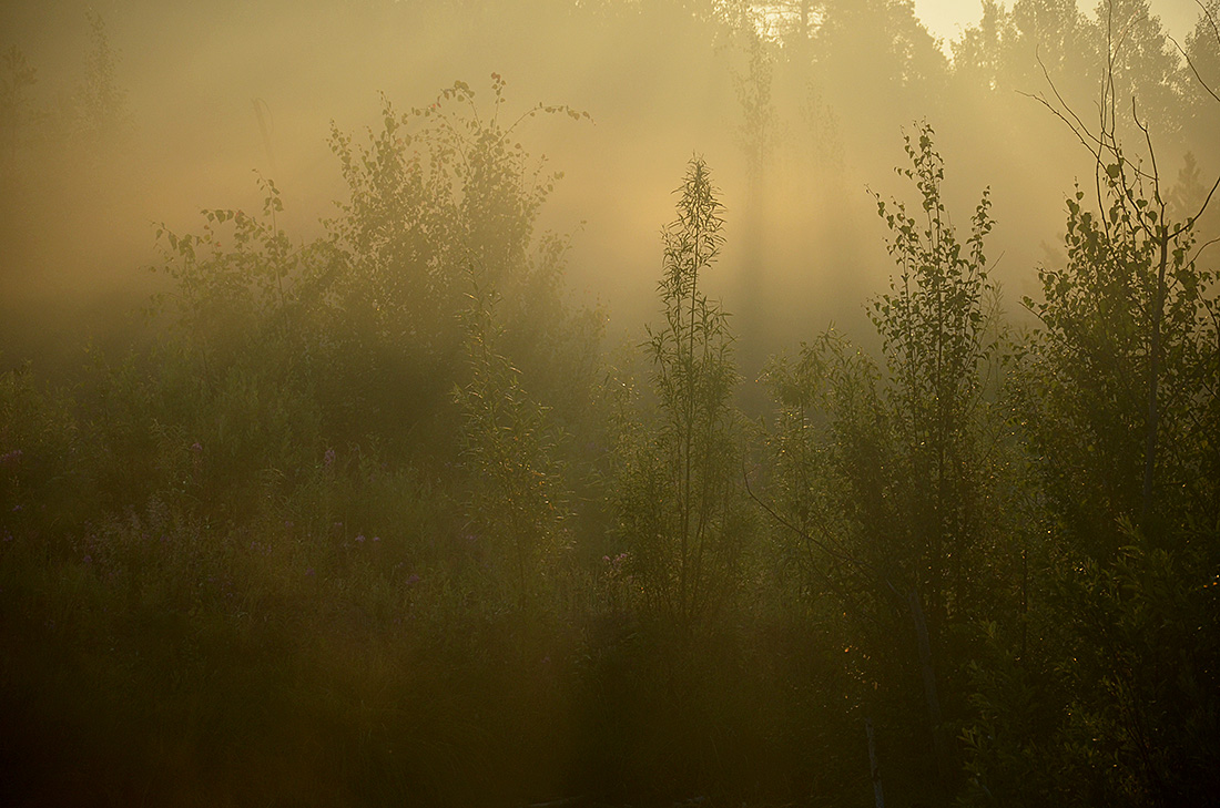 "фото ""«Вкус солнечного света»"" метки: пейзаж, природа, лес, туман"