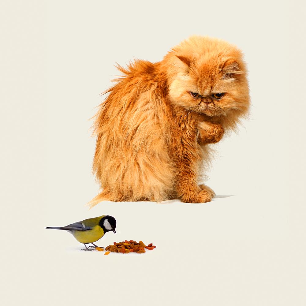 """photo """"***"""" tags: genre, montage, кошки, наглость, птицы"""