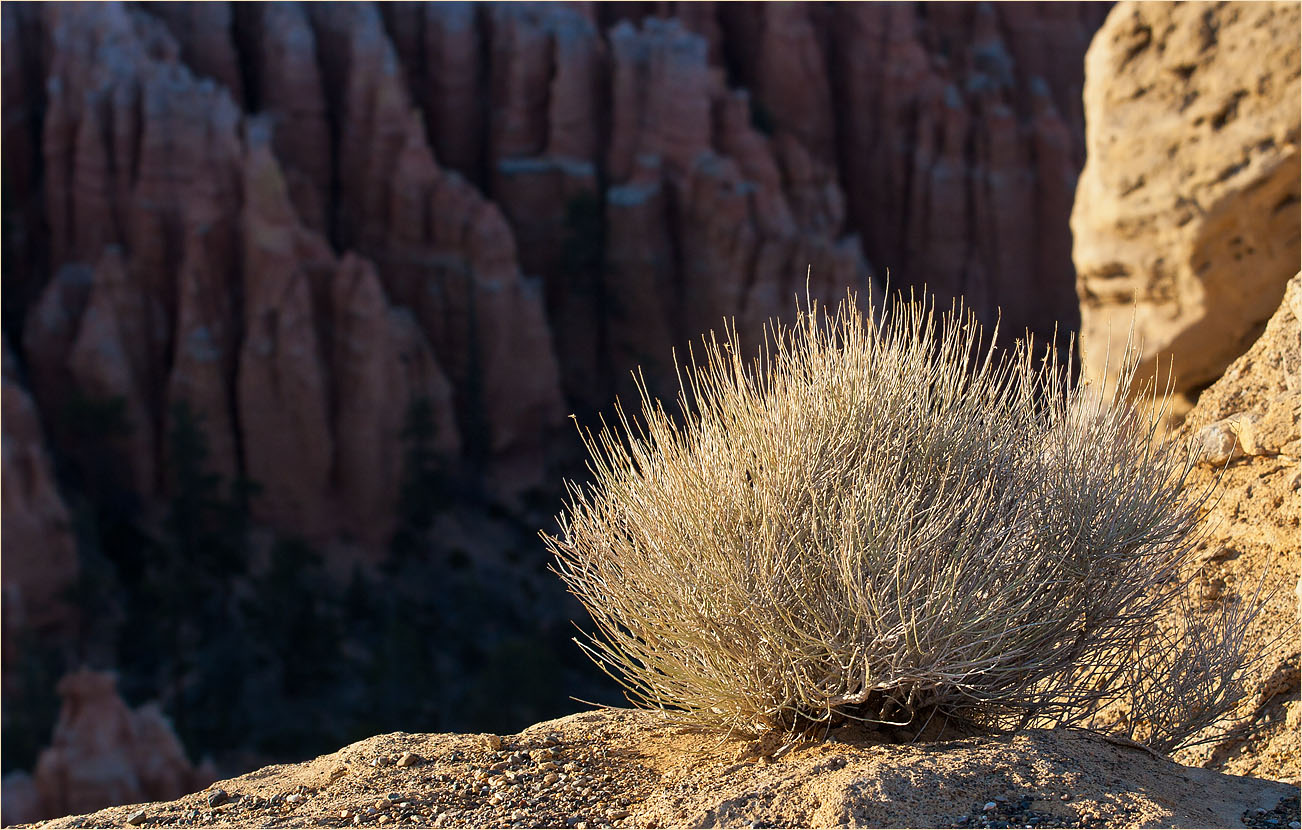 "photo ""Hedgehog at the edge"" tags: nature,"