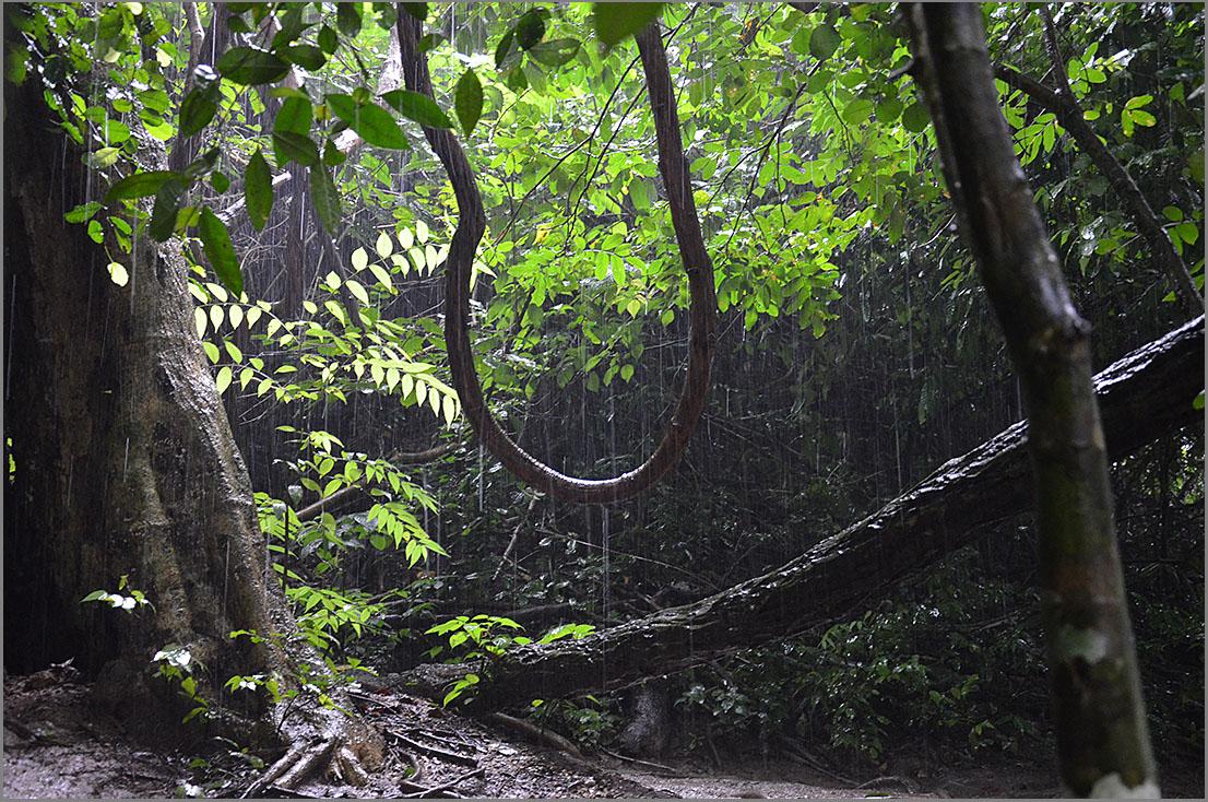 "фото ""Под дождем"" метки: пейзаж, природа, путешествия, лес"