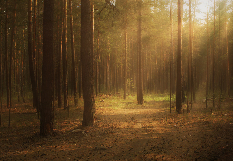 "photo ""***"" tags: landscape, misc., forest"