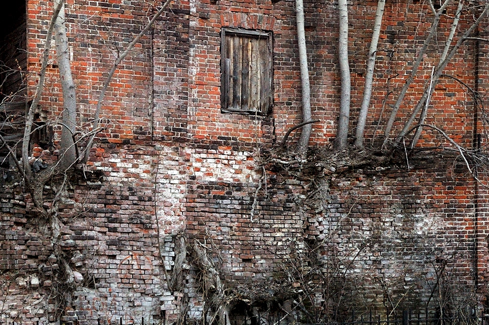 "photo ""***"" tags: nature, деревья, кирпичи, корни, стена"