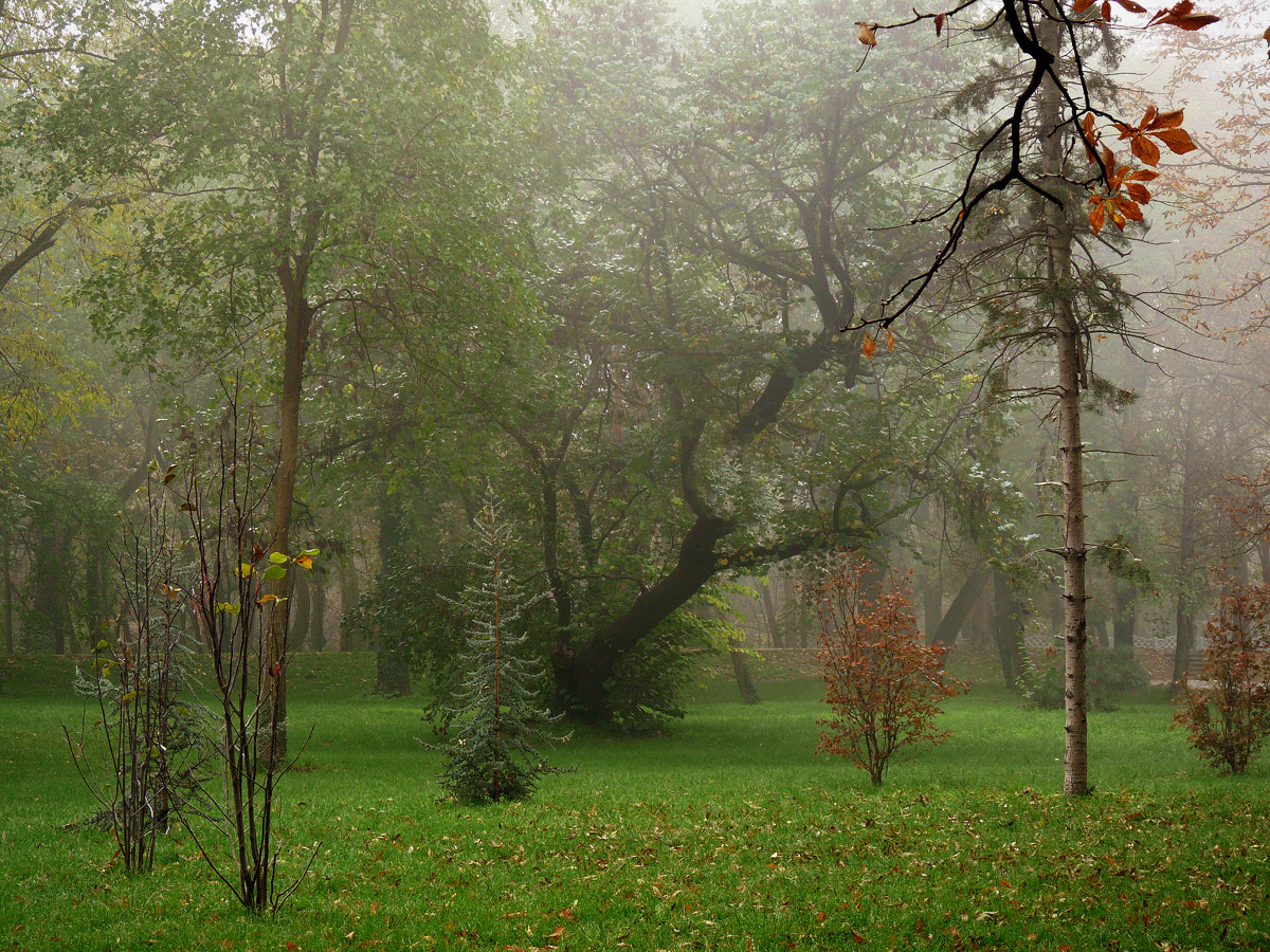 "photo ""***"" tags: landscape, fog"