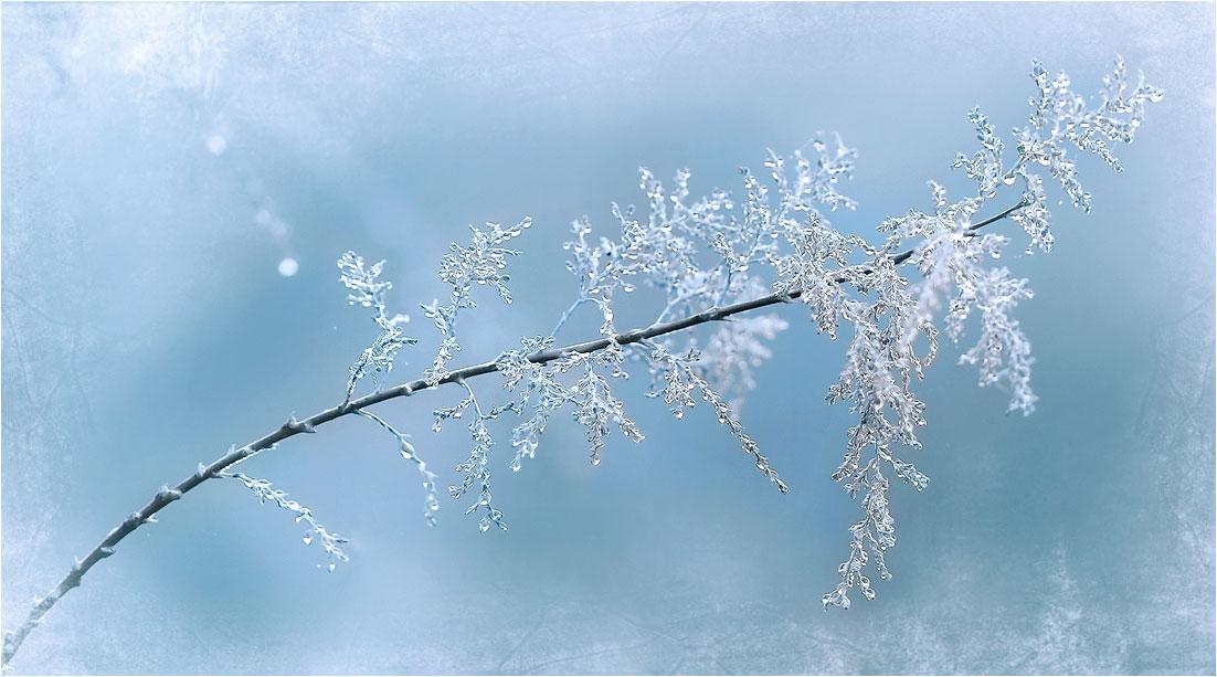 """фото """"На землю тихо опустилась зима.."""" метки: ,"""