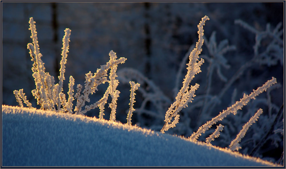 "photo ""***"" tags: nature, hoarfrost, травинки"