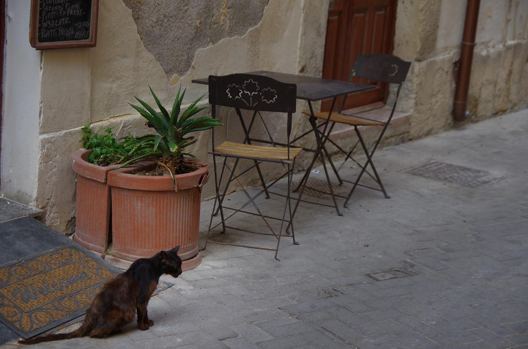 """фото """"приглашает мудрый кот"""" метки: путешествия,"""