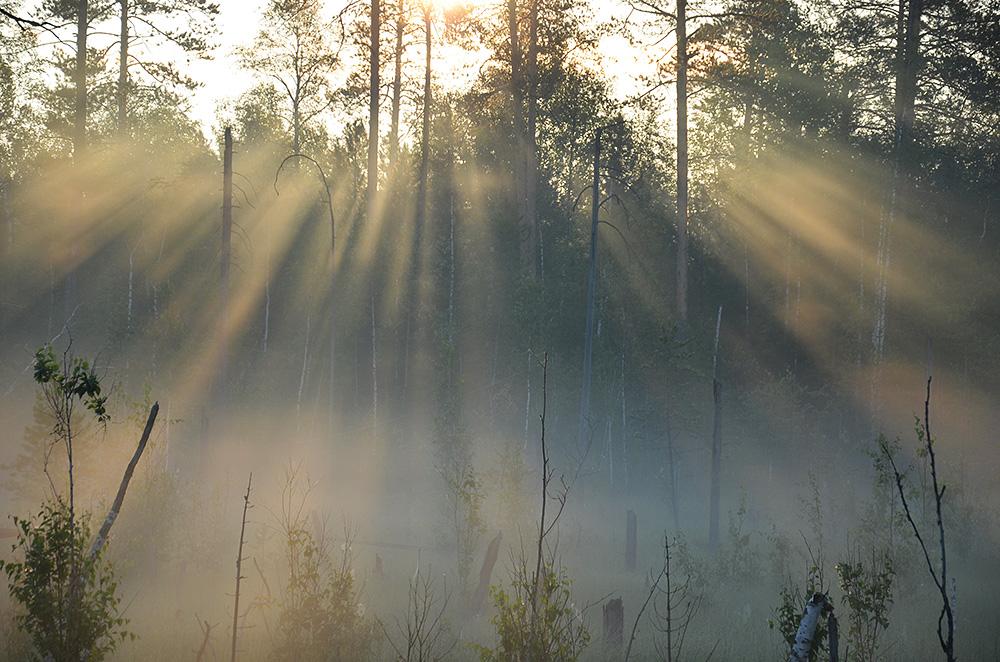 """фото """"В лучах рассвета."""" метки: пейзаж, природа, лес, туман"""