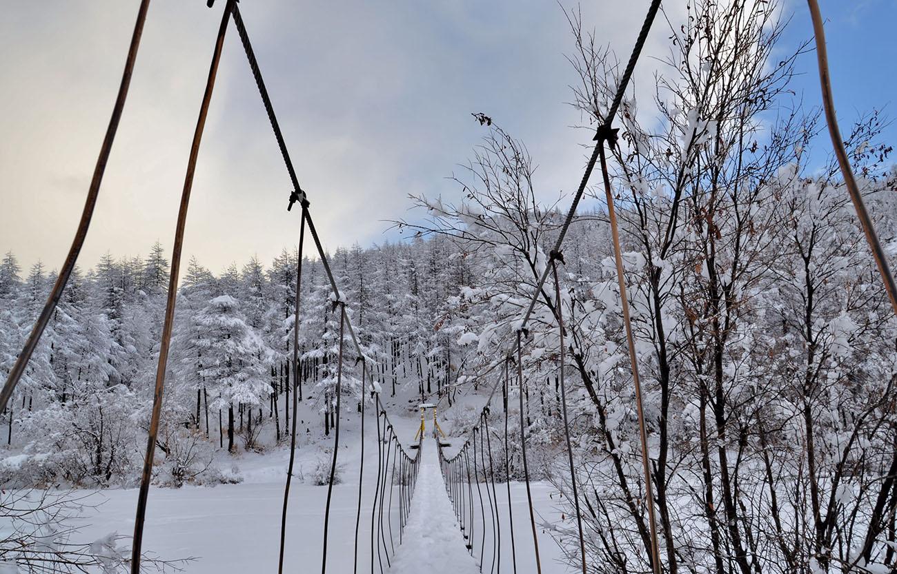 """фото """"Мостик в лес"""" метки: пейзаж, зима, лес, мост, снег"""