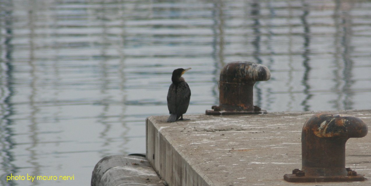 "photo ""alone  in the port"" tags: reporting,"