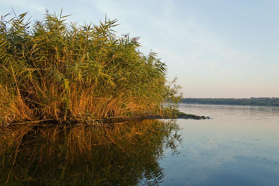 """фото """"Осенью на закате"""" метки: пейзаж, Днепр, Запорожье, берег, закат, камыши, пляж, сентябрь"""