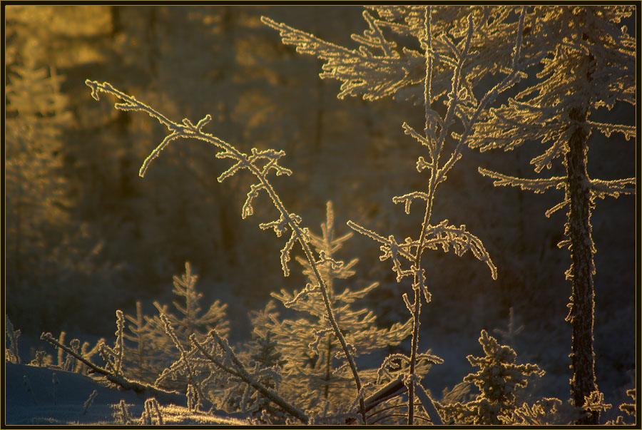 """фото """"Зимний этюд"""" метки: природа, иней, мороз, тайга"""
