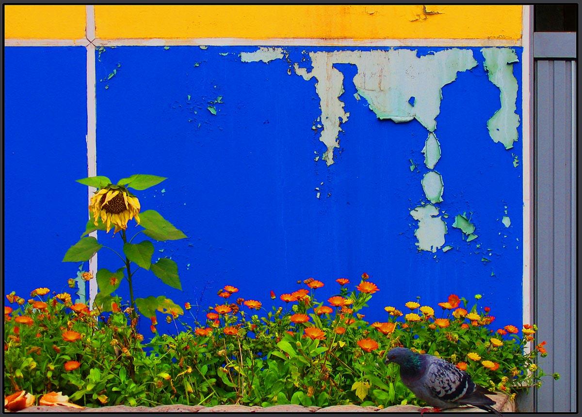 """фото """"накануне осени"""" метки: природа, птица, стена, цветы"""