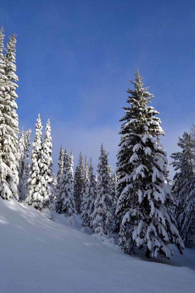"""фото """"В лесу."""" метки: пейзаж, зима.природа., пейзаж."""